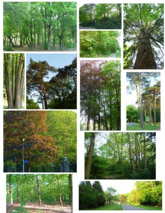 bomen_maken_plaats_voor_asfalt-1